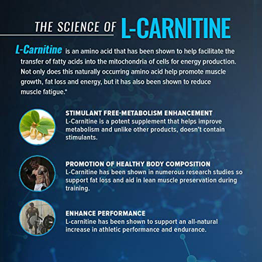 The Science of L-Carnitine